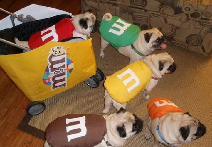 Cute Or No Comment Yes Or No Follow Printypets For More Cute Dog Costumes Cute Dog Halloween Costumes Halloween Animals