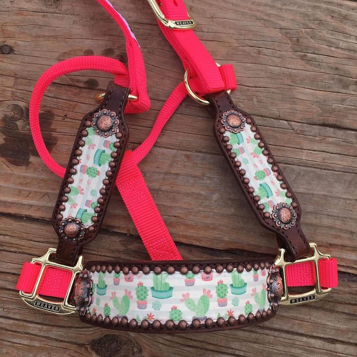 "713 Likes, 18 Comments - WhinneyWear (@whinneywear) on Instagram: ""SOLD!! BUT WE CAN MAKE MORE!! Bronc halter with ADORABLE cactus print leather overlay, copper berry…"""