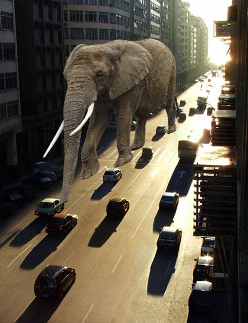 An elephant in the city.