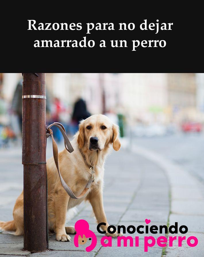 Razones Para No Dejar Amarrado A Un Perro Perros Cuidar Animales Duenos De Perros
