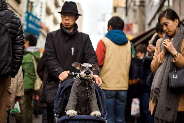 """Σαν να έχει βγάλει ένα μωρό βόλτα, ο κύριος από το Τόκιο, γυρνά τον καλοντυμένο σκύλο του στην ψαραγορά Tsukijji.Νομίζω ότι η κυρία δίπλα σκέφτεται """" Καημένο σκυλί να έχεις ένα τέτοιον ηλίθιο για αφεντικό""""."""