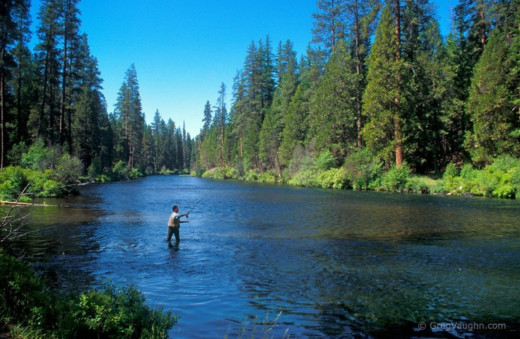 Fly fisherman on the Metolius River