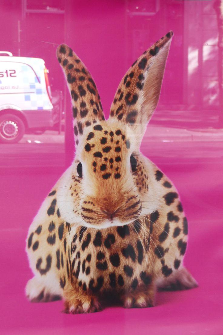 s-spotted-rabbit-p1030198.jpg 2,368×3,552 pixels