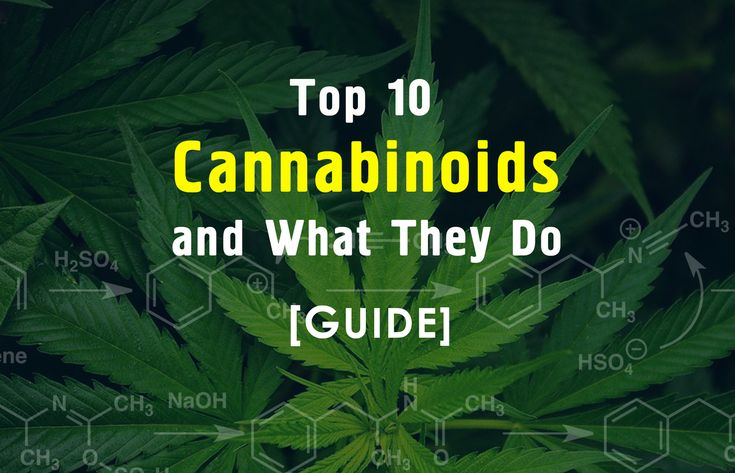 What Are Cannabinoids And What Do They Do Manual Guide