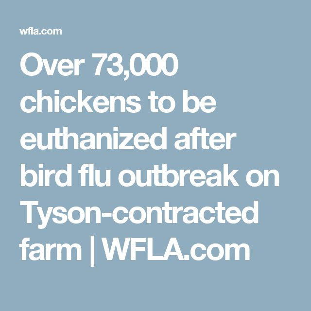 Over 73,000 chickens to be euthanized after bird flu outbreak on Tyson-contracted farm | WFLA.com