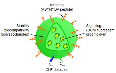 Figure 1 Schematic representation of the organic fluorescent nanoparticles.