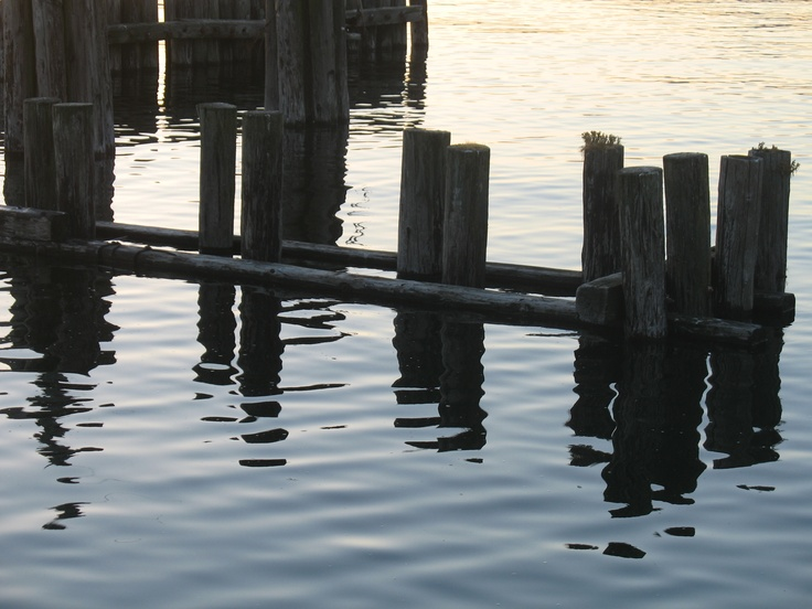 Old pilings beside the pier at Davis Bay