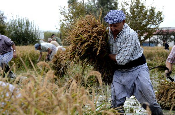 http://elpachinko.com/escapadas-por-espana/tarragona-fiesta-de-la-siega-delta-del-ebre/  La fiesta de la siega del arroz en el Delta del Ebro