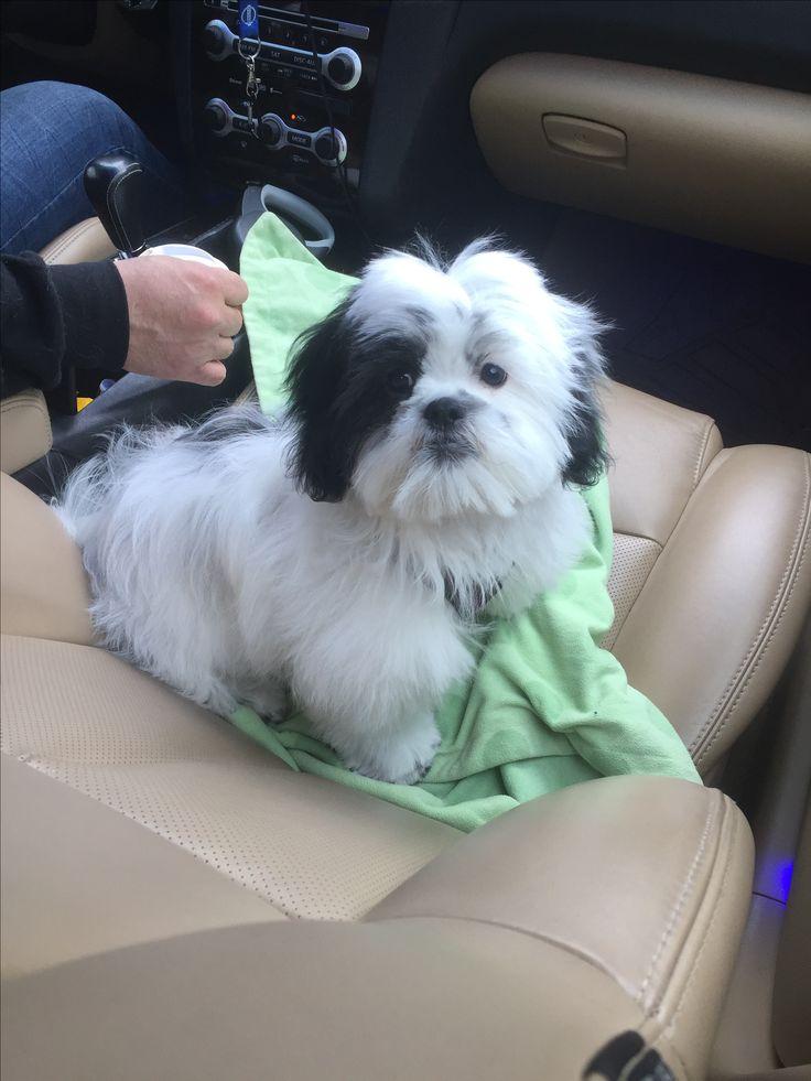 Finn's first puppy cut