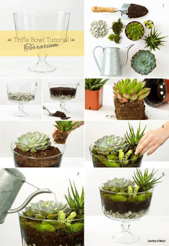 Succulent terrarium diy. Add charcoal on top of rocks.