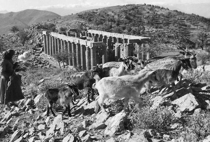 Ο Ναός του Επικούρειου Απόλλωνος στις Βάσσες προπολεμικά.... (Ο ναός υψώνεται στα 1.130 μέτρα, στο κέντρο της Πελοποννήσου, πάνω στα βουνά μεταξύ Ηλείας, Αρκαδίας και Μεσσηνία
