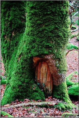 i wonder what it would be like to live inside a tree... i believe it would be rather enchanting & cozy :)