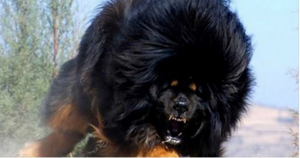 The Most Dangerous Dog Breeds In The World