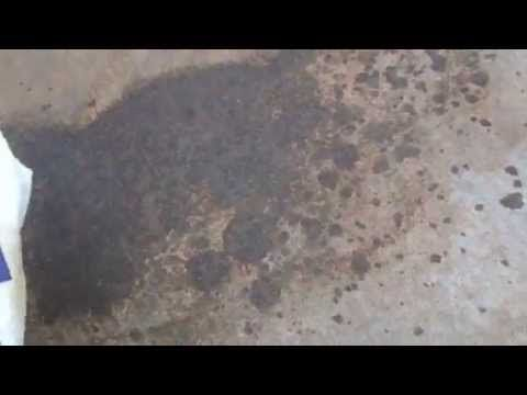 Magic trick (use a brick!): driveway oil stains disappear!