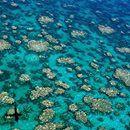 Los científicos alertaron que el blanqueo de los corales de la Gran Barrera de Australia es irrecuperable - Infobae.com  Infobae.com Los científicos alertaron que el blanqueo de los corales de la Gran Barrera de Australia es irrecuperable Infobae.com El fenómeno de debilitamiento es provocado por el aumento de la temperatura del agua vinculado al calentamiento global. Este ecosistema, que se extiende a lo largo de…