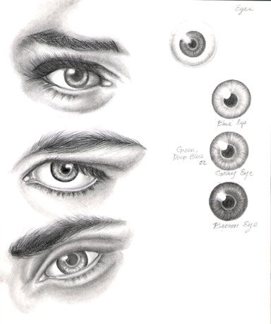 Eye Study by ShamiART on deviantART  ART ED CENTRAL FAV>>>