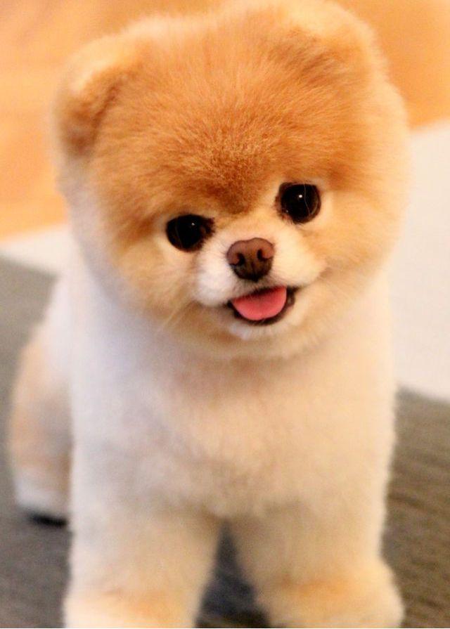 Ta Vie Avec Version Kpop Cute Dogs Cute Dog Wallpaper Cute Puppy Wallpaper