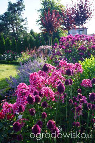 Forum ogrodnicze - Ogrodowisko