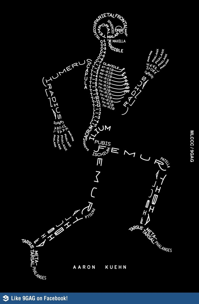 8 best knowledge images on pinterest anatomy bones fandeluxe Images