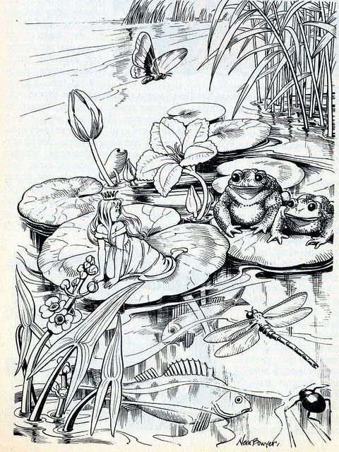 Kleurplaat elf kikker