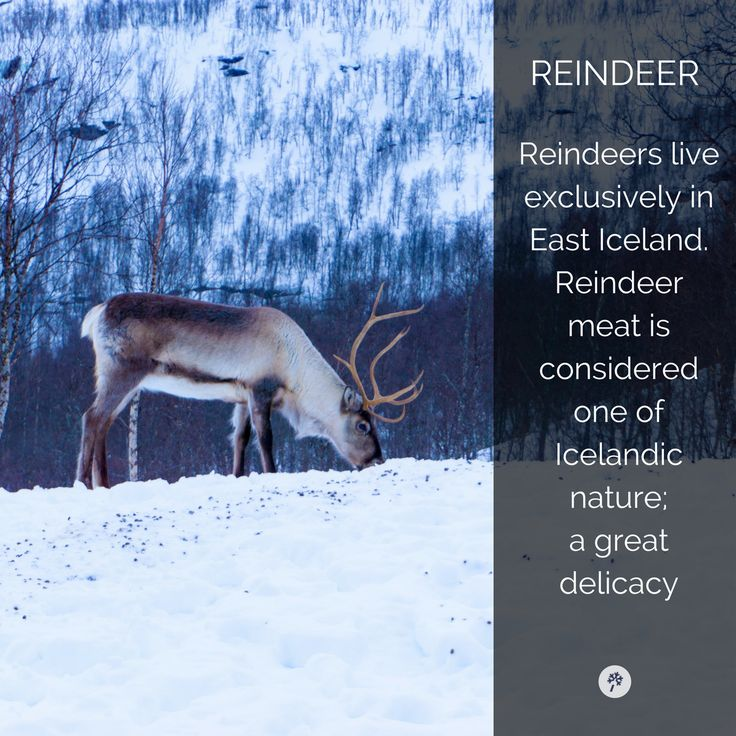 Explore wildlife in Iceland like never before. www.tour.is