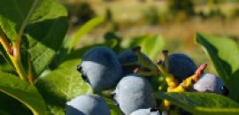 Cherry Top Farm is a sustainable fruit, nut and berry farm in Northern Tasmania