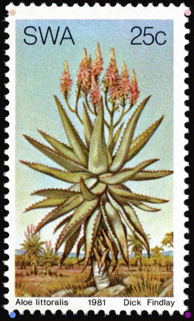 South West Africa 1981 Aloe Littoralis Sudwestafrika Aloe Mi Na Sw 507 Sn Na Sw 478 Yt Na Sw 464 Flower Stamp West Africa Stamp