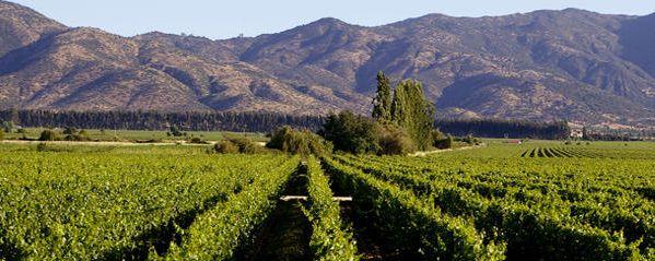 P de Rothschild - Maipo Chile wine   Escudo rojo - White - Chardonnay  Quite nice, almost as good as a good Burgundy!