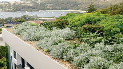 Gardening Australia Rooftop Paradise Outdoors Roof