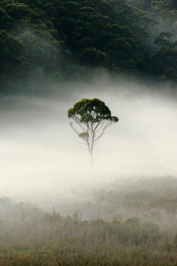 Lone gum tree, Salmon River, Tasmania. tree