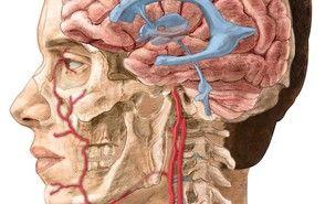 Medical Illustration image