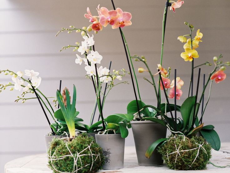how to make an orchid kokedama