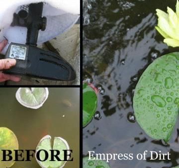 An easy trick for a {sparkling, clean} pond!