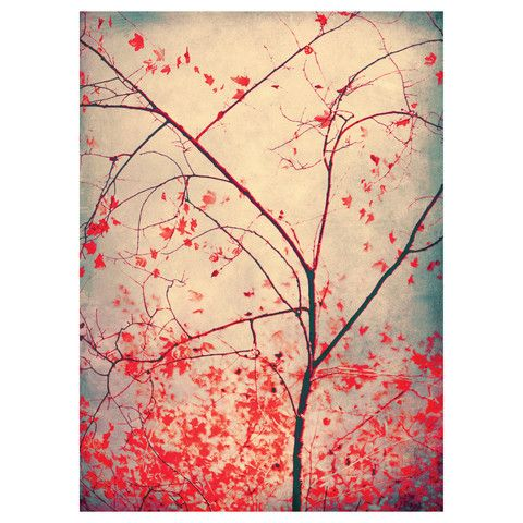 Tree Photography Decal - Red October by Ingrid Beddoes