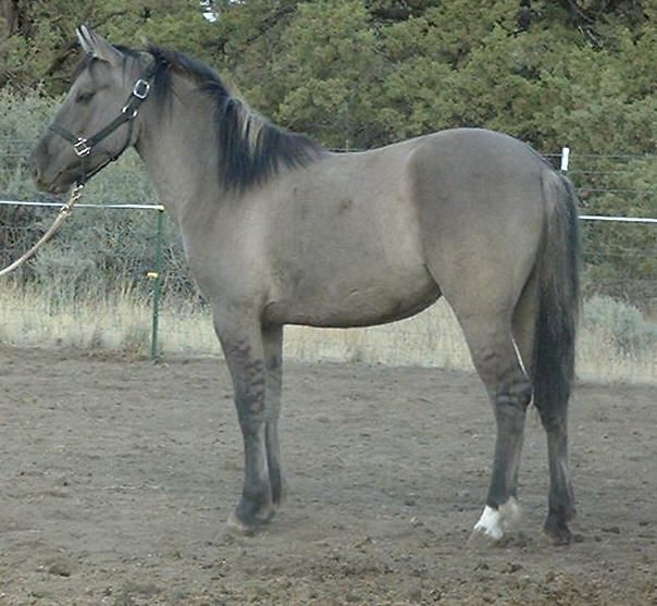 17 Best Images About Rare Horse Colors On Pinterest