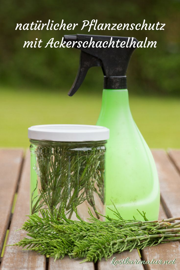 Simply apply natural pesticides with field horsetail yourself