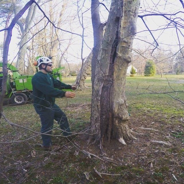 Hug a tree day is coming up on April 15th. We've been practicing.  Dave Walker, Tree Climber here at Giroud, hugs this Sycamore tree before its removed.  #giroudtreeandlawn #treebiz #treeremoval #arborist #treeservice #arblife #climblife #treesurgeon #arboriculture #climbing_pictures_of_instagram #welovetrees #treecompany #diseasedtree #buckscounty #montgomerycounty #philadelphia #mainline #hugatree #welovetrees