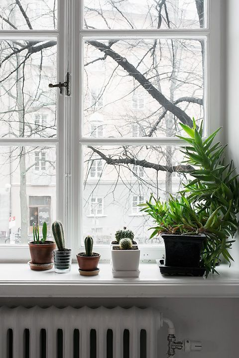 bathroom/window shelf.