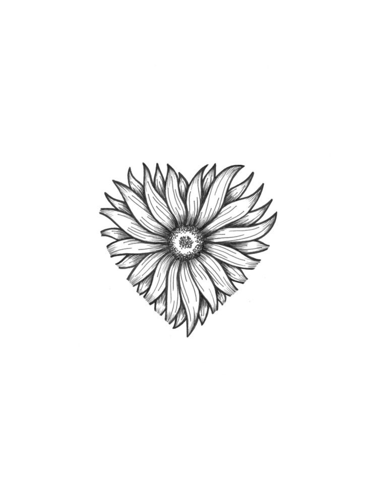 Line Drawing Sunflower Tattoo : Best printables floral and plant life images on