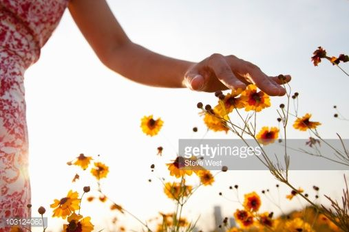 Stock Photo : Woman's hand touching wild flowers in meadow