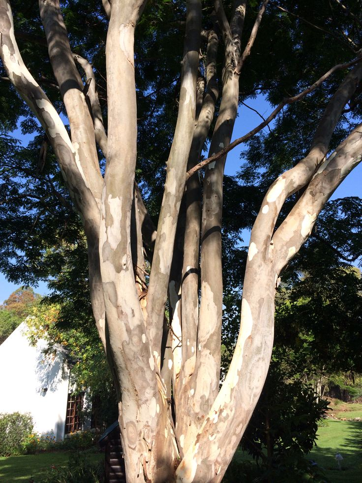 Huggable tree!