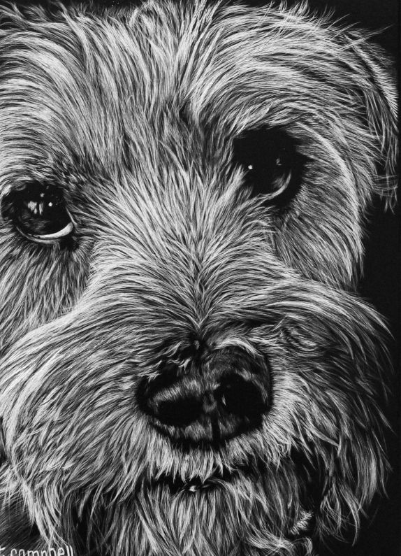 """Rufus"" - commissioned scratchboard by artist Trista Campbell. Go to TristaCampbell.com to see how you can commission a board of your pet!"