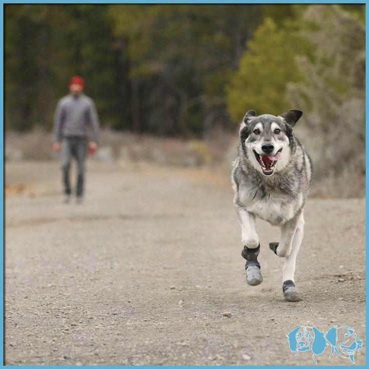Summit Trex - scarpe per cani uso quotidiano - Ruffwear http://www.dogspecialist.it/summit-trex-scarpe-per-cani-uso-quotidiano.html