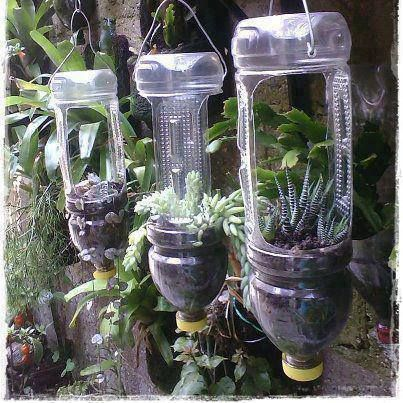 Les 25 meilleures id es de la cat gorie jardin bouteille - Ou planter un palmier dans son jardin ...