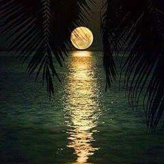 Swim right up to the moon