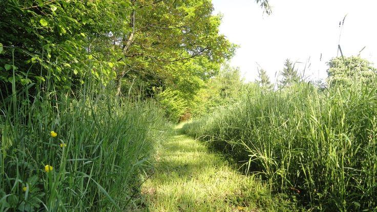 Afbeeldingsresultaat voor gemaaide paden door groene natuur