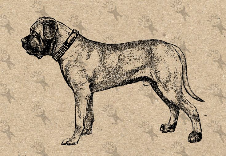 Vintage image Dog Dogge Mastiff picture Instant Download Digital printable clipart graphic scrapbooking burlap tote towels t-shirt HQ 300dpi by UnoPrint on Etsy