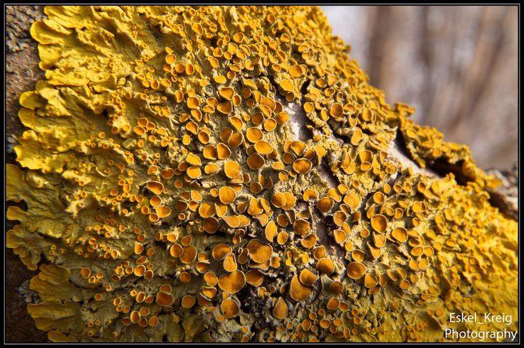Lichen tree by EskelKreig on DeviantArt