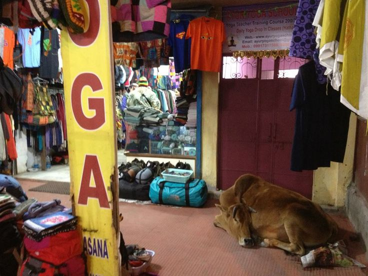 http://taojourneys.com/journey-to-india   A cow sleeping in a store in Rishikesh. Cows are respected and considered Holy in India.