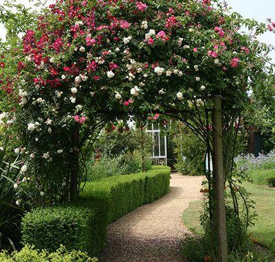 1000+ Ideas About Pflanzen Für Terrasse On Pinterest Feuerkorb Im Garten Gestaltungstipps